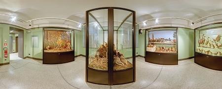 Cremona Museo Storia Naturale Territorio